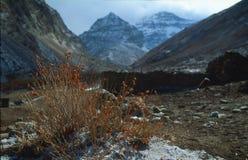 θάμνος σταφίδων σε ένα υπόβαθρο των βουνών Στοκ Φωτογραφίες