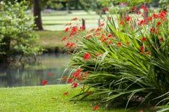 Θάμνος των κόκκινων λουλουδιών στο πάρκο Στοκ φωτογραφία με δικαίωμα ελεύθερης χρήσης