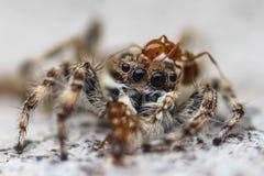 Θάνατος της αράχνης στοκ φωτογραφία με δικαίωμα ελεύθερης χρήσης