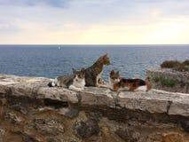 Θάλασσα γατών Στοκ εικόνες με δικαίωμα ελεύθερης χρήσης