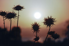 Θάλασσα ηλιοβασιλέματος Galilee Στοκ εικόνες με δικαίωμα ελεύθερης χρήσης