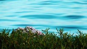 Θάλασσα και έδαφος Στοκ φωτογραφία με δικαίωμα ελεύθερης χρήσης