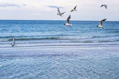Θάλασσα και γλάροι Στοκ Φωτογραφία