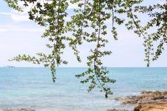 Θάλασσα και ουρανός δέντρων Στοκ εικόνα με δικαίωμα ελεύθερης χρήσης