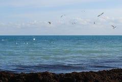 Θάλασσα-κομμάτι Στοκ Εικόνες
