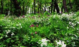 Θάλασσα λουλουδιών στο δάσος Στοκ Εικόνες