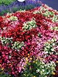 θάλασσα λουλουδιών Στοκ Εικόνα