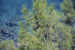 θάλασσα πεύκων Στοκ φωτογραφία με δικαίωμα ελεύθερης χρήσης