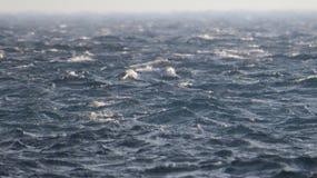 Θάλασσα Στοκ Εικόνα