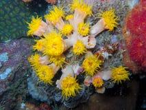 Θάλασσα anemones διανυσματική απεικόνιση