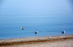 Θάλασσα Azov στοκ φωτογραφίες με δικαίωμα ελεύθερης χρήσης