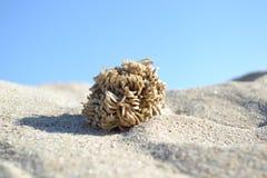 Θάλασσα critter στοκ φωτογραφία με δικαίωμα ελεύθερης χρήσης