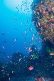 Θάλασσα goldie Στοκ φωτογραφία με δικαίωμα ελεύθερης χρήσης