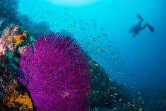 Θάλασσα goldie Στοκ Εικόνες