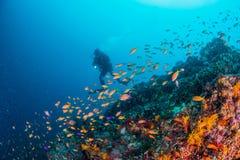 Θάλασσα goldie Στοκ εικόνες με δικαίωμα ελεύθερης χρήσης