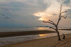 Θάλασσα scape και νεκρό δέντρο στοκ εικόνα