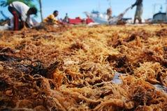 Θάλασσα sead στοκ φωτογραφίες με δικαίωμα ελεύθερης χρήσης
