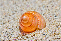 Θάλασσα Shell 1 Στοκ Εικόνες