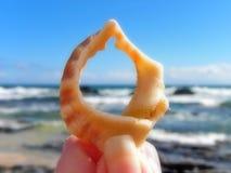 Θάλασσα Shell στοκ εικόνες