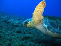 Θάλασσα Tertles Στοκ φωτογραφία με δικαίωμα ελεύθερης χρήσης