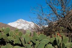 θέα βουνού ατλάντων στοκ εικόνες με δικαίωμα ελεύθερης χρήσης