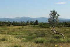 Θέα βουνού - τοπίο, τοπίο Στοκ Εικόνες