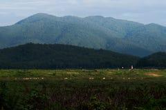 Θέα βουνού τοπίων Στοκ Εικόνα