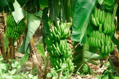 θέα μπανανών Στοκ φωτογραφία με δικαίωμα ελεύθερης χρήσης