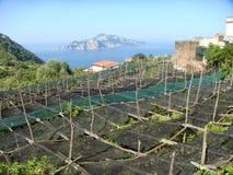 Θέα του νησιού Capri στη μέση της θάλασσας με στους αμπελώνες πρώτου πλάνου Νότος ακτών της Αμάλφης της Ιταλίας στοκ εικόνα με δικαίωμα ελεύθερης χρήσης