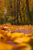 Θέμα πάρκων Στοκ Εικόνες