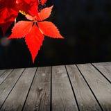 Θέμα φθινοπώρου και κενός ξύλινος πίνακας γεφυρών. Στοκ Φωτογραφία