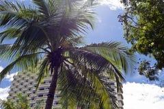 Θέρετρο ξενοδοχείων που χτίζει την υπαίθρια άποψη με το φοίνικα στοκ φωτογραφίες με δικαίωμα ελεύθερης χρήσης