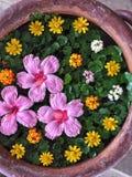 Θέρετρο Ταϊλάνδη δοχείων λουλουδιών Στοκ εικόνα με δικαίωμα ελεύθερης χρήσης