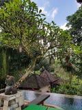 Θέρετρο ubud, Μπαλί στοκ φωτογραφίες με δικαίωμα ελεύθερης χρήσης