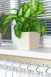Θέρμανση του άσπρου θερμαντικού σώματος θερμαντικών σωμάτων με το λουλούδι και το παράθυρο Στοκ φωτογραφία με δικαίωμα ελεύθερης χρήσης