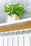 Θέρμανση του άσπρου θερμαντικού σώματος θερμαντικών σωμάτων με το λουλούδι και το παράθυρο Στοκ Εικόνες