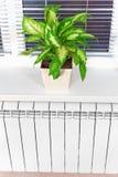 Θέρμανση του άσπρου θερμαντικού σώματος θερμαντικών σωμάτων με το λουλούδι και το παράθυρο Στοκ εικόνες με δικαίωμα ελεύθερης χρήσης