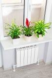 Θέρμανση του άσπρου θερμαντικού σώματος με το λουλούδι και το παράθυρο στοκ εικόνα