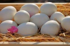 Θέση αυγών στο άχυρο Picture2 Στοκ φωτογραφία με δικαίωμα ελεύθερης χρήσης
