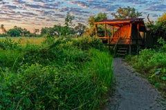 Θέση για κατασκήνωση, δέλτα Okavango, Μποτσουάνα στοκ εικόνα