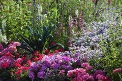 Θέση θερινών ανθίζοντας κήπων με το πελαργόνιο και την πετούνια στοκ φωτογραφία