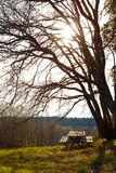Θέση που χαλαρώνει στα ξύλα Στοκ Εικόνα