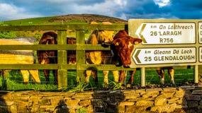 Θέση σημαδιών με τις αγελάδες Στοκ εικόνες με δικαίωμα ελεύθερης χρήσης