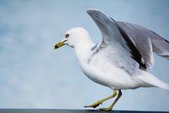 Θέστε για να πετάξετε Στοκ φωτογραφία με δικαίωμα ελεύθερης χρήσης