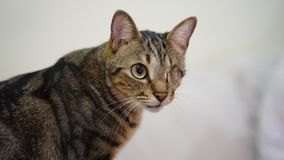 Θέστε εκτός λειτουργίας τη γάτα με μια άδεια ματιών στοκ εικόνες