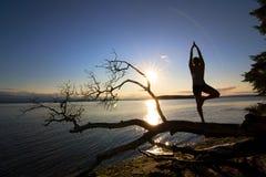 θέστε το δέντρο ηλιοβασ&iota Στοκ εικόνα με δικαίωμα ελεύθερης χρήσης