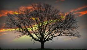 θέτοντας δέντρο ήλιων στοκ εικόνες