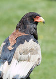 θήραμα πουλιών Στοκ Φωτογραφίες