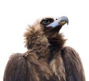 θήραμα πουλιών Στοκ Εικόνες