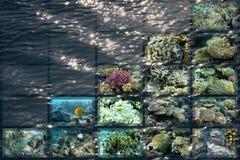 θαλάσσια Ερυθρά Θάλασσ&alph Στοκ εικόνες με δικαίωμα ελεύθερης χρήσης